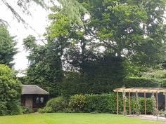 Danbury X 2 take down leylandii trees in the corner 10