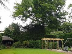 Danbury X 2 take down leylandii trees in the corner 11