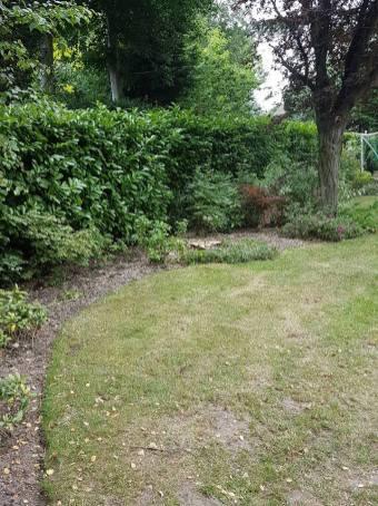 Danbury X 2 take down leylandii trees in the corner 20