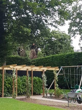 Danbury X 2 take down leylandii trees in the corner 3