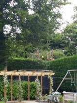 Danbury X 2 take down leylandii trees in the corner 4