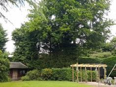 Danbury X 2 take down leylandii trees in the corner 9
