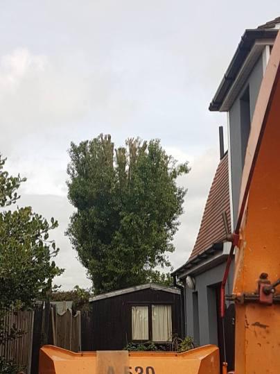 Reducing Poplar Tree 10