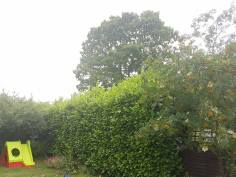 Reducing Poplar Tree 11