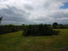 Reducing in height leylandii trees - Tillingham 7
