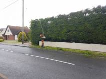 Reducing in height leylandii trees & facing them back TillinghamHigh Street (before) 4