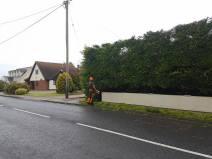 Reducing in height leylandii trees & facing them back TillinghamHigh Street (before) 5