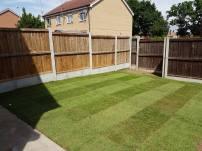 Rotavating existing garden Basildon preparing to lay turf 4