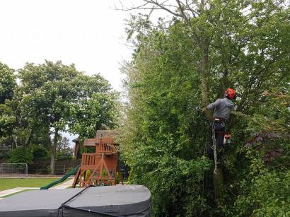 Taking down x1 ash tree with ash dieback lower Burnham Road over a hot tub 2