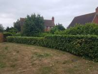 Topping & facing back alongside the boundary laurel hedge St Peter's Court Bradwell 2