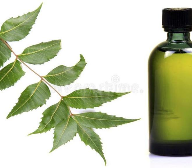 Neem oil and leaves: impressive health benefits and uses