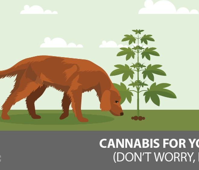 Cannabis For Your Dog