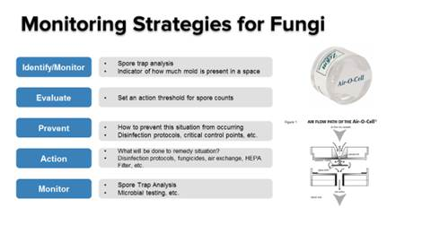 Cannabis: Fungal Monitoring