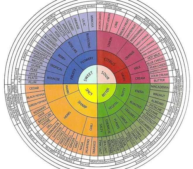 Cannabis:  Introduction to Terpenes