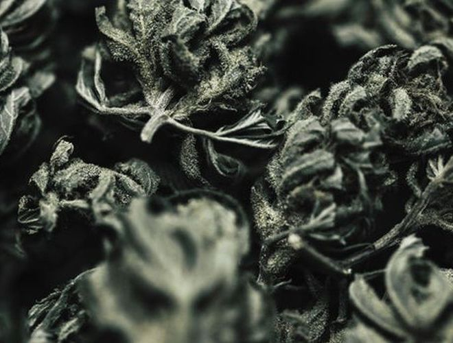 Cannabis Waste Is 'Special Regulated Waste' and That's a Costly Problem for the Industry