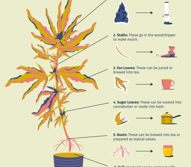 What to do with cannabis stalks, leaves, & stems from harvest
