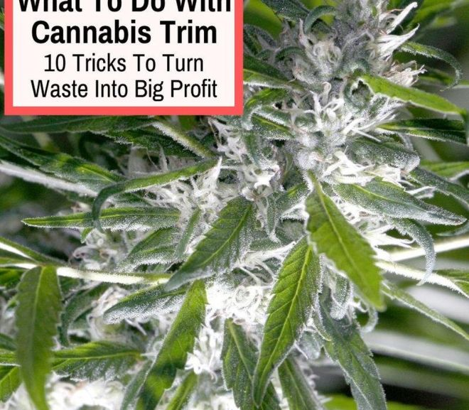 What To Do With Cannabis Trim: 10 Tricks To Turn Waste Into Big Profit