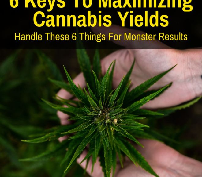 6 Keys To Maximizing Cannabis Yields (Handle These For Monster Results)