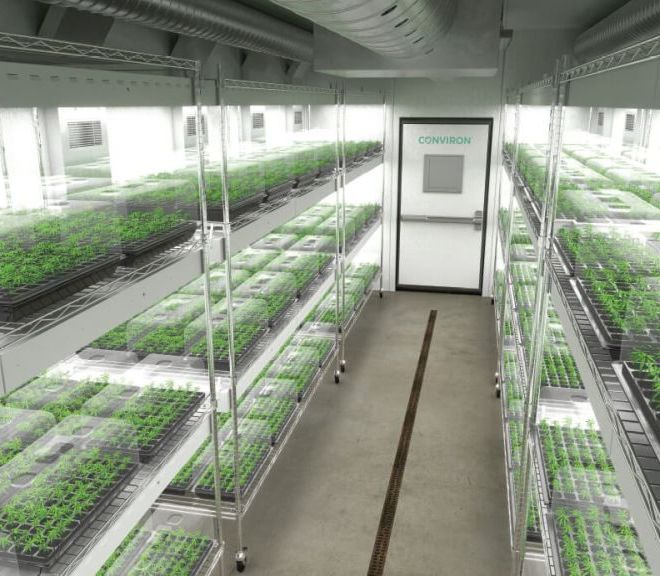 Cannabis Clone Rooms