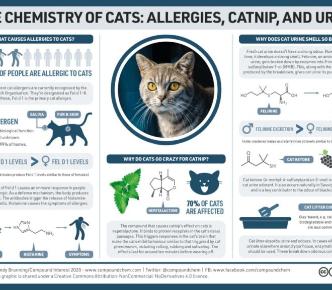 The chemistry of cats: Allergies, catnip and urine