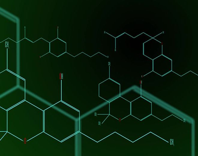 The Role of Cannabinoids in the Global Fight Against Antibiotic Resistance
