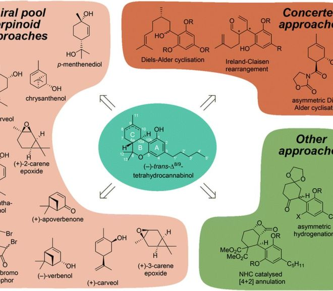 Synthetic pathways to tetrahydrocannabinol (THC)