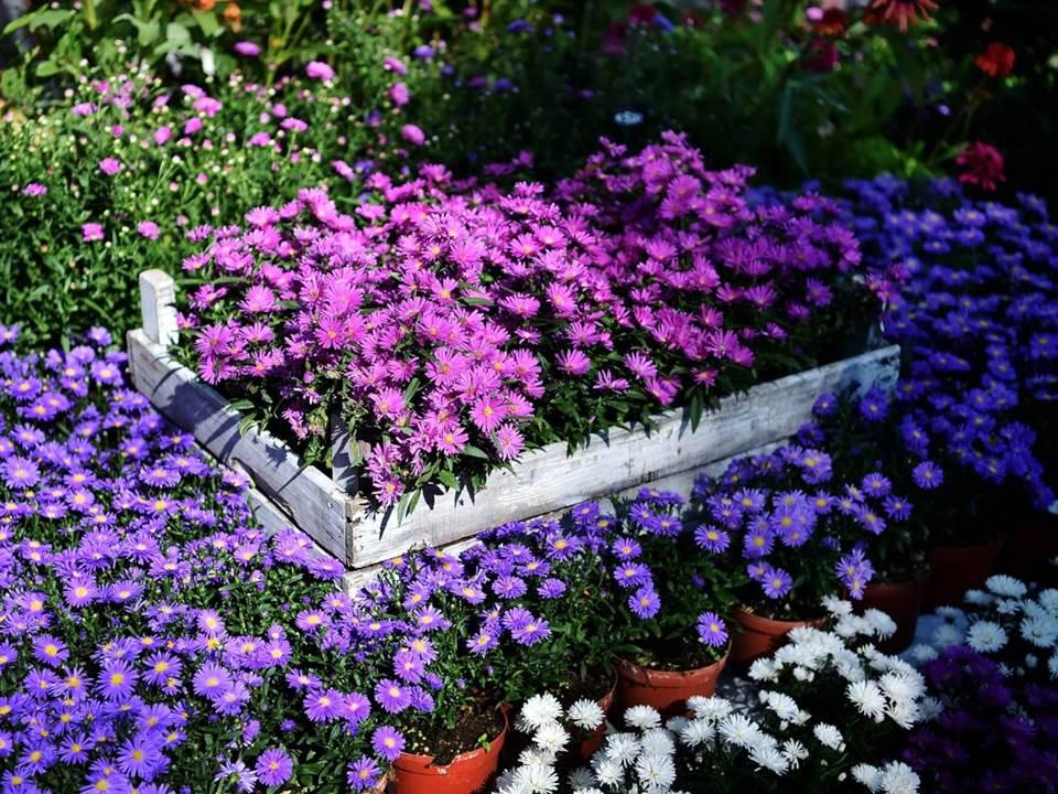Floralia di primavera fiori e piante in mostra for Piante e fiori