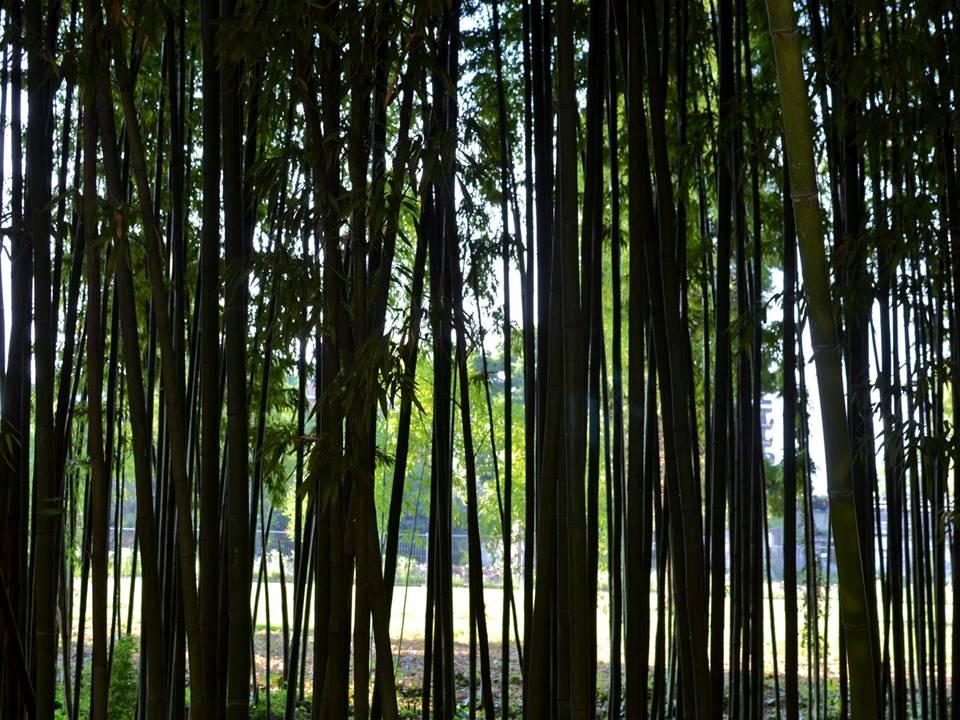 bosco bambù milano