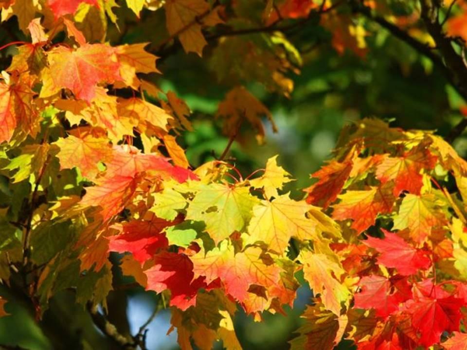 5 mete autunno lombardia