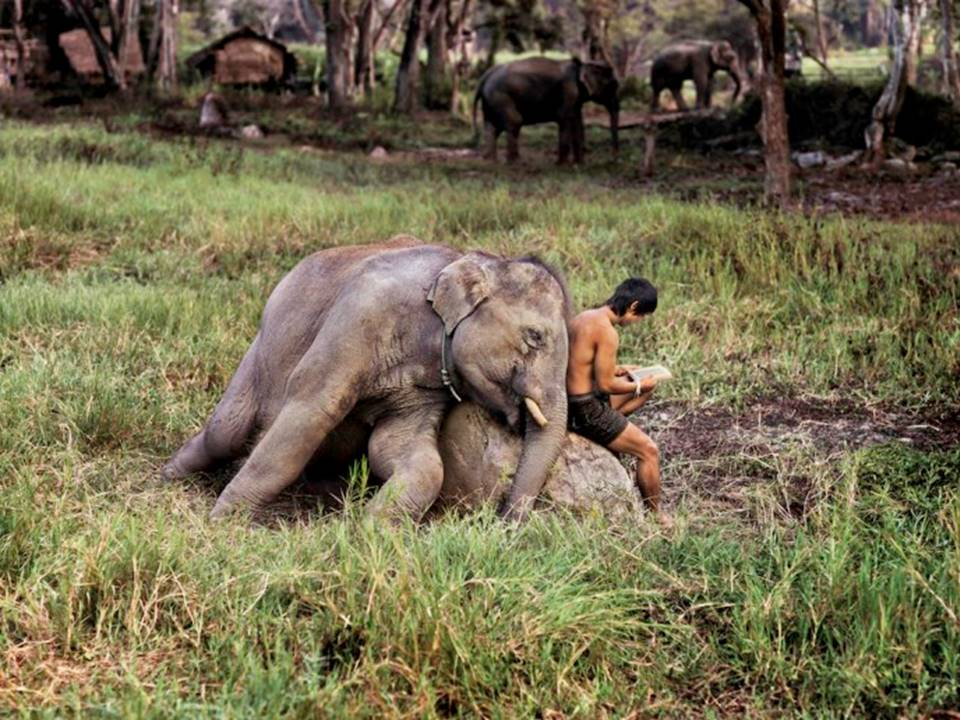 animals steve mccurry