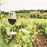 成城石井で選ぶ10選!ワインのおつまみはこれ!定番と意外な逸品も!