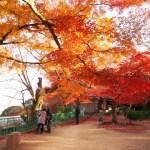 舞鶴城公園紅葉の時期2017!見ごろやオススメスポット情報