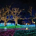 東南植物楽園ひかりの散歩道2017!イルミネーションの期間は?