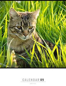 Cats of Montcocher