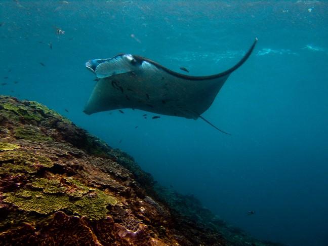 Manta bay of Nusa Penida