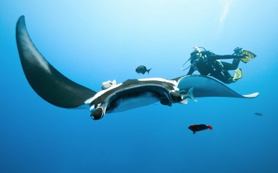 Indonesia Creates World's Largest Manta Sanctuary