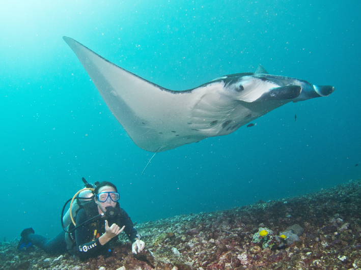 Mantas Give Clues on a Future 'Blue Economy'