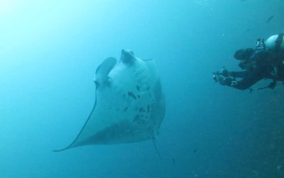 Day 5 : The best manta site in the world?
