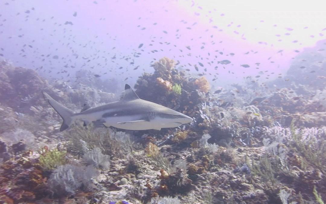 Day 15: Sharks, Turtles but no Mantas in Komodo
