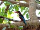 Kingfisher At Hesaraghatta Lake Bangalore