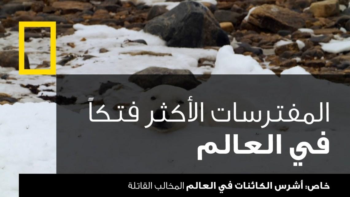 أشرس الكائنات في العالم: المخالب القاتلة | ناشونال جيوغرافيك أبوظبي