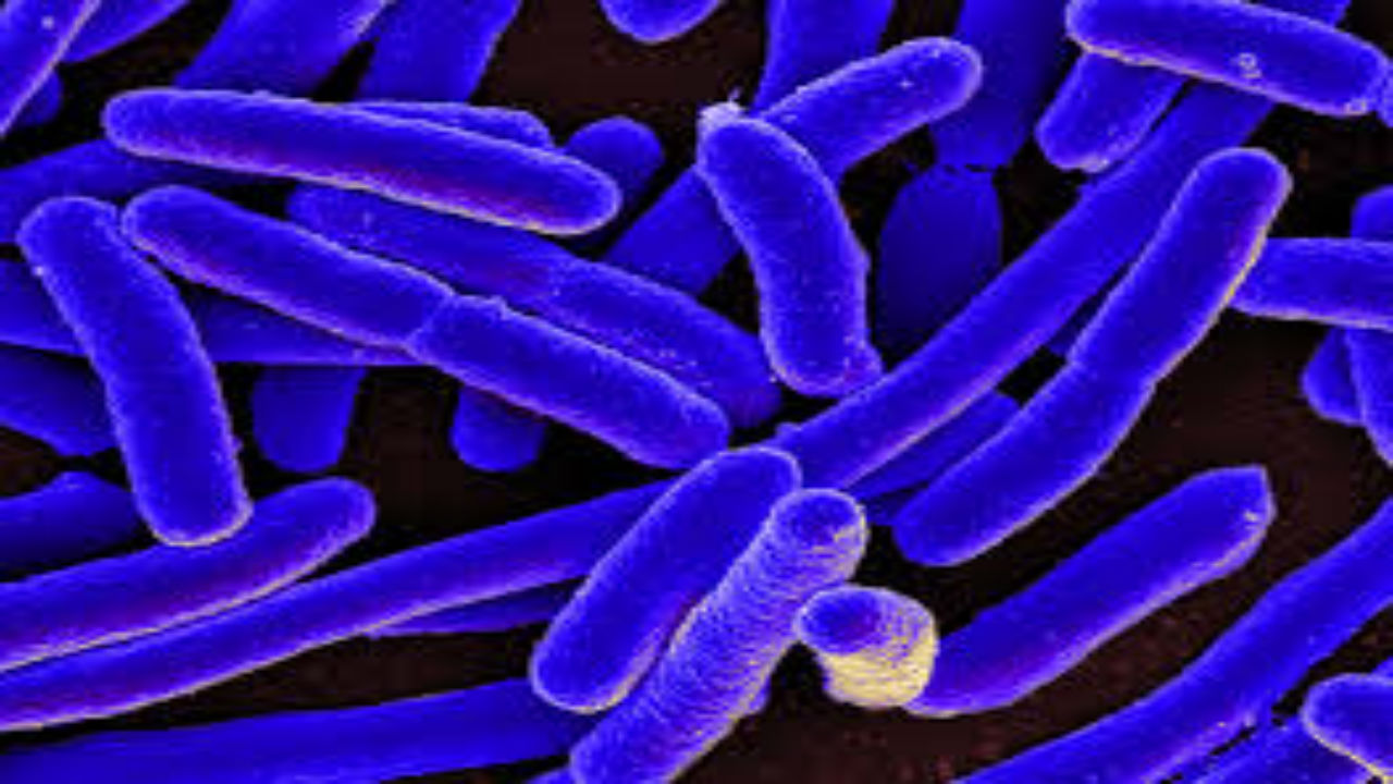 A Healthy Gut Bacteria MUST have…