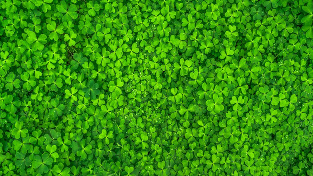 Microgreens – Why You Should Be Eating Them…