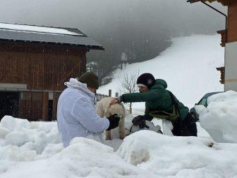 Hund findet die Person im tiefen Schnee