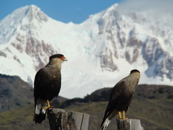 Vida selvagem na Patagônia argentina