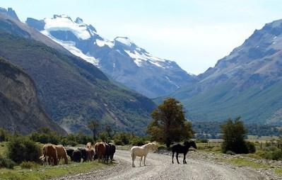 Cavalos na estrada em El Chaltén