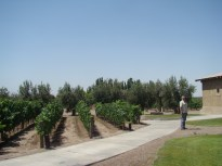 Vinícola na região de Mendoza, Argentina