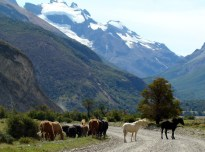 El Chaltén, Argentina, cavalos na pista