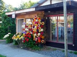 Flores de madeira, Pucón, Chile