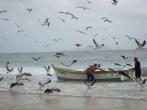 Arrastão na Praia dos Ingleses, Florianópolis